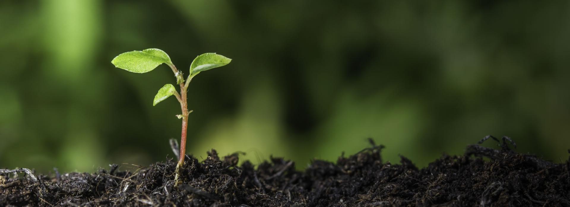 Ekologické řízení